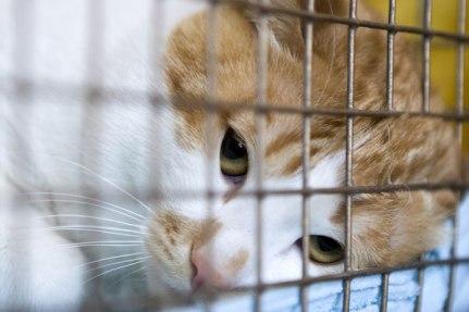 sad-orange-cat